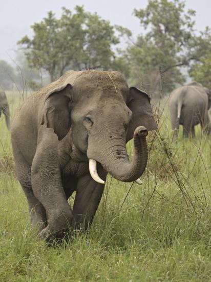 Elephant Greeting, Corbett National Park, Uttaranchal, India-Jagdeep Rajput-Photographic Print