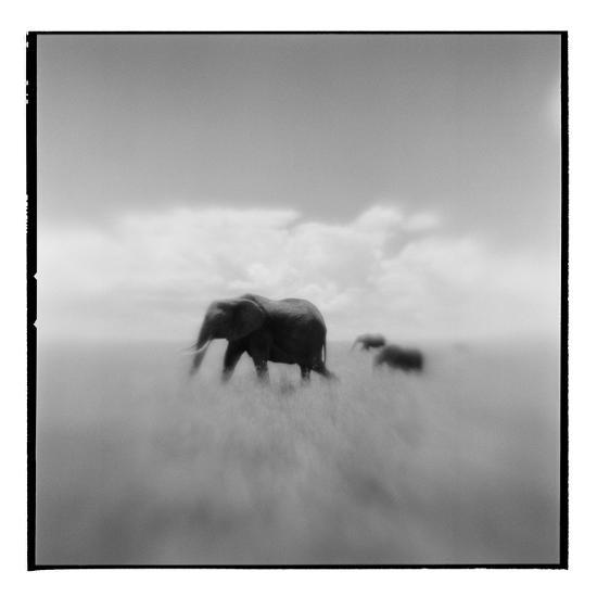 Elephant Herd, Masai Mara Game Reserve, Kenya-Paul Souders-Photographic Print