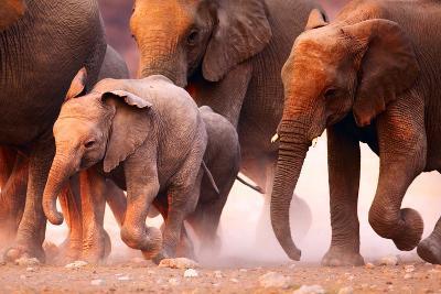 Elephant Herd on the Run in Etosha Desert-Johan Swanepoel-Photographic Print