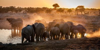 Elephant Huddle-Simon Van Ooijen-Photographic Print