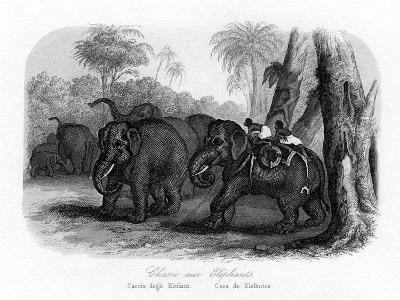Elephant Hunt, India, C1840--Giclee Print