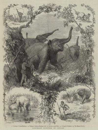 Elephant Hunting in Ceylon--Giclee Print
