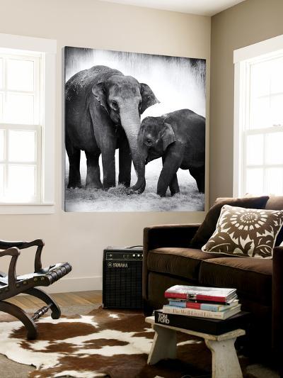 Elephant III-Debra Van Swearingen-Loft Art