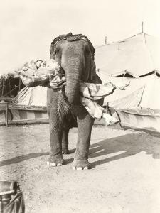 Elephant Lifting Female Clown at Circus