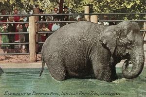 Elephant, Lincoln Park Zoo