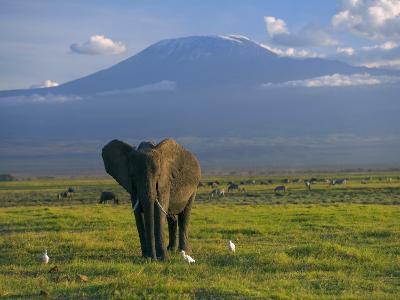 Elephant, Mt. Kilimanjaro, Masai Mara National Park, Kenya-Peter Adams-Photographic Print