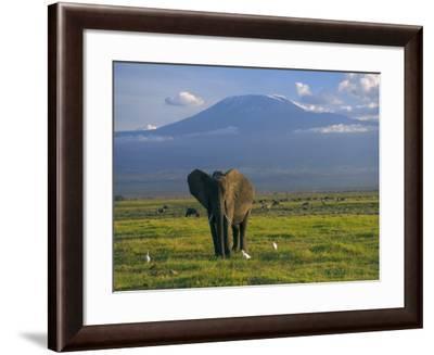 Elephant, Mt. Kilimanjaro, Masai Mara National Park, Kenya-Peter Adams-Framed Photographic Print