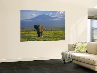 Elephant, Mt. Kilimanjaro, Masai Mara National Park, Kenya-Peter Adams-Wall Mural