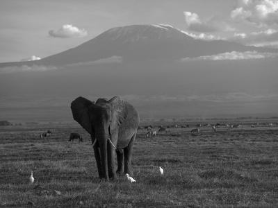 https://imgc.artprintimages.com/img/print/elephant-mt-kilimanjaro-masai-mara-national-park-kenya_u-l-pxmxln0.jpg?p=0