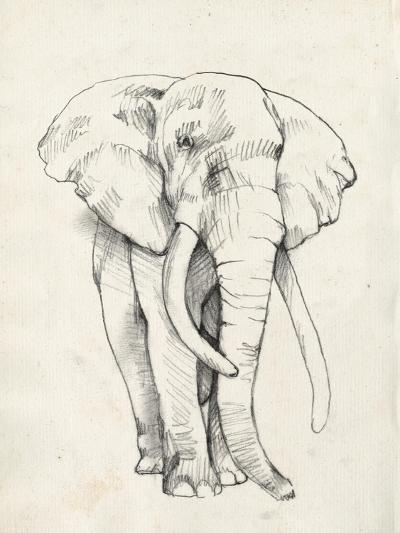 Elephant Portrait II-Jennifer Goldberger-Art Print