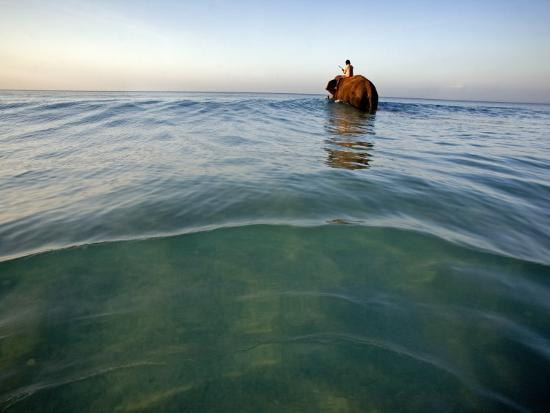 Elephant 'Rajes' Wading into Sea with His Mahout on Back-Johnny Haglund-Photographic Print