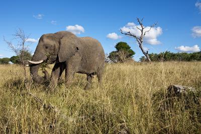 Elephant, Sabi Sabi Reserve, South Africa-Paul Souders-Photographic Print