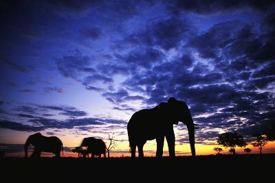 Elephant Silhouettes-Paul Souders-Photographic Print