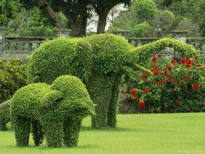 Elephant Topiaries in a Formal Garden-Michael Melford-Photographic Print