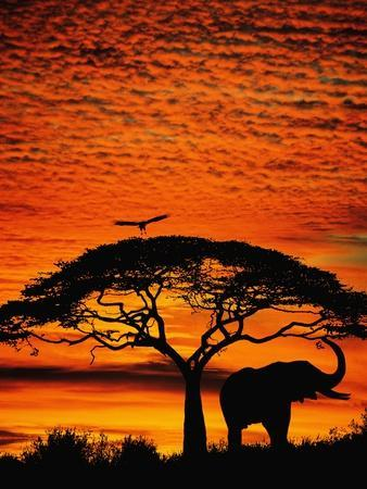 https://imgc.artprintimages.com/img/print/elephant-under-broad-tree_u-l-pzkoso0.jpg?p=0