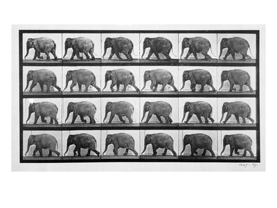 https://imgc.artprintimages.com/img/print/elephant-walking-plate-733-from-animal-locomotion-1887-b-w-photo_u-l-q1g8do20.jpg?p=0