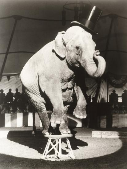 Elephant Wearing Top Hat Performing on Stool in Circus--Photo