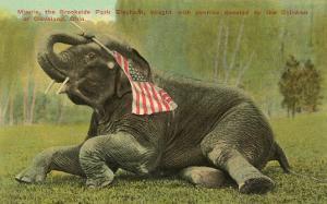 Elephant with Flag, Zoo in Cleveland, Ohio