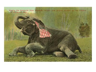 Elephant with Flag, Zoo in Cleveland, Ohio--Art Print