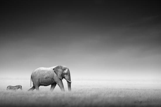 Elephant with Zebra behind on Open Plains of Etosha (Artistic Processing)-Johan Swanepoel-Photographic Print