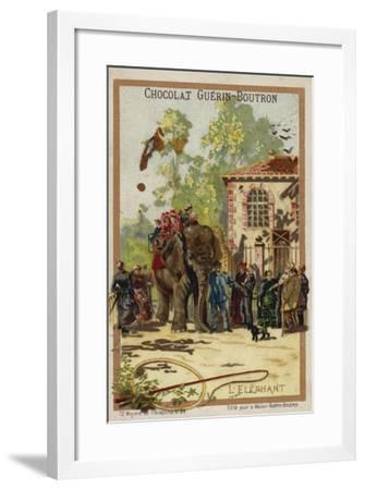 Elephant--Framed Giclee Print