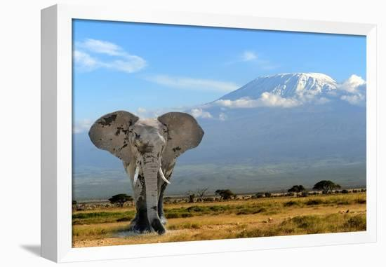 Elephant-byrdyak-Framed Stretched Canvas Print