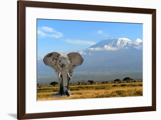 Elephant-byrdyak-Framed Premium Photographic Print