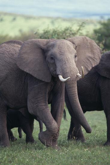 Elephant-DLILLC-Photographic Print