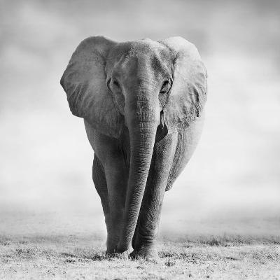 Elephant-Donvanstaden-Photographic Print