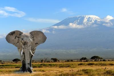 Elephant-byrdyak-Photographic Print