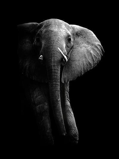 Elephant!-WildPhotoArt-Photographic Print