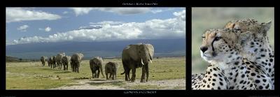 Elephants and Cheetah-Michel & Christine Denis-Huot-Art Print