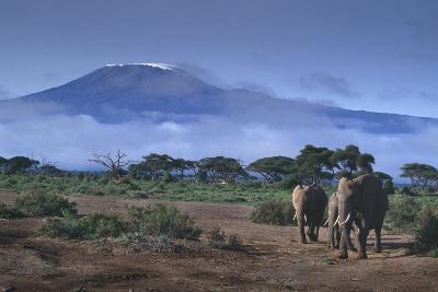 Elephants and Mountain-DLILLC-Photographic Print