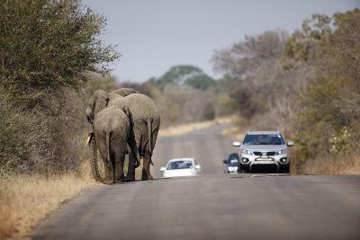 Elephants and Tourist Vehicles, South Africa-Richard Du Toit-Photographic Print