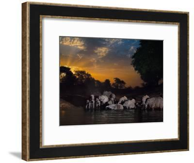 Elephants drink at the last remaining water hole during dry season-Michael Nichols-Framed Photographic Print