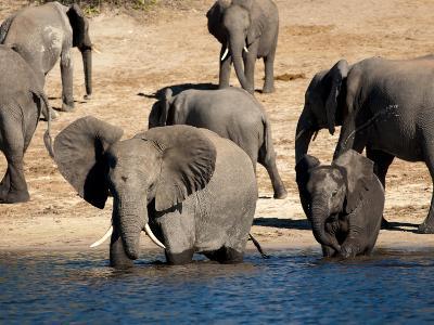 Elephants Drinking, Namibia, Africa-Kim Walker-Photographic Print