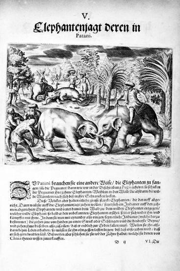 Elephants Fighting, 1606-Theodore de Bry-Giclee Print
