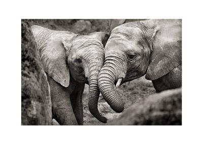 Elephants in Love-Marina Cano-Art Print