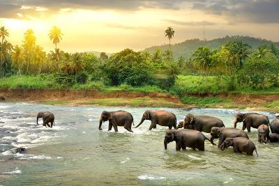 Elephants in River- Givaga-Photographic Print
