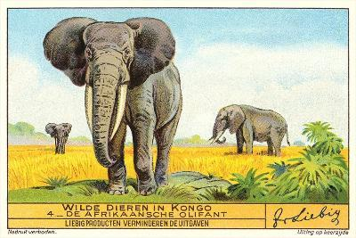 Elephants in the Congo--Art Print