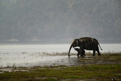 Elephants in Water-Ganesh H Shankar-Photographic Print