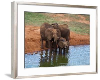 Elephants (Loxodonta Africana) at Water Hole, Tsavo East National Park, Kenya, East Africa, Africa-Sergio Pitamitz-Framed Photographic Print