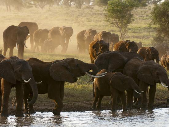 Elephants (Loxodonta Africana), Lualenyi Game Reserve, Kenya, East Africa, Africa-Sergio Pitamitz-Photographic Print