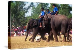 Elephants Playing Soccer, Elephant Round-Up, Surin, Thailand