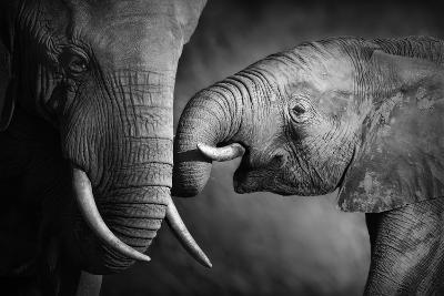 Elephants Showing Affection (Artistic Processing)-Johan Swanepoel-Photographic Print