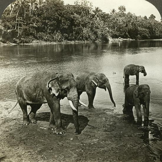Elephants, Sri Lanka (Ceylo)-Underwood & Underwood-Photographic Print