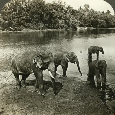 https://imgc.artprintimages.com/img/print/elephants-sri-lanka-ceylo_u-l-q10ljjl0.jpg?p=0