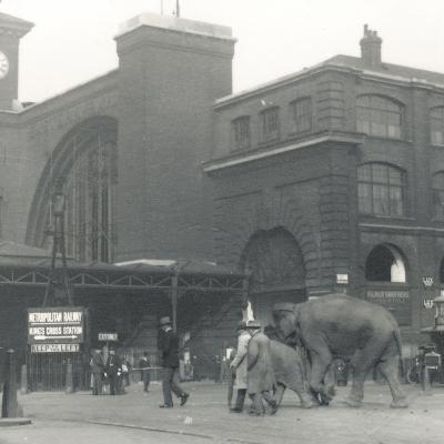 Elephants Walking from the Docks Passing Kings Cross Station on the Way to Zsl London Zoo-Frederick William Bond-Photographic Print