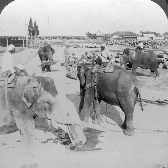 Elephants Working in a Timber Yard, India, C1900s-Underwood & Underwood-Photographic Print