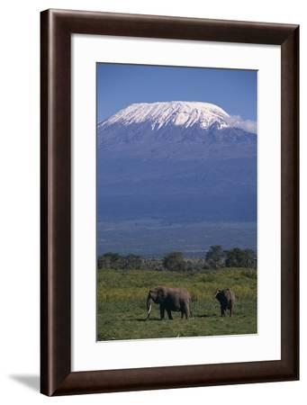 Elephants-DLILLC-Framed Photographic Print